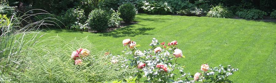tuinonderhoud haarlem hoveniersbedrijf van der zon
